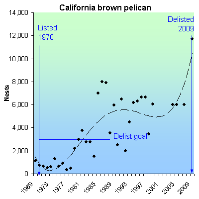 species recovery california brown pelican Brown Pelican Diagram Deepwater Horizon now because of this recovery plan the california brown pelican has been recovered, delisted, and placed on the least concerned list